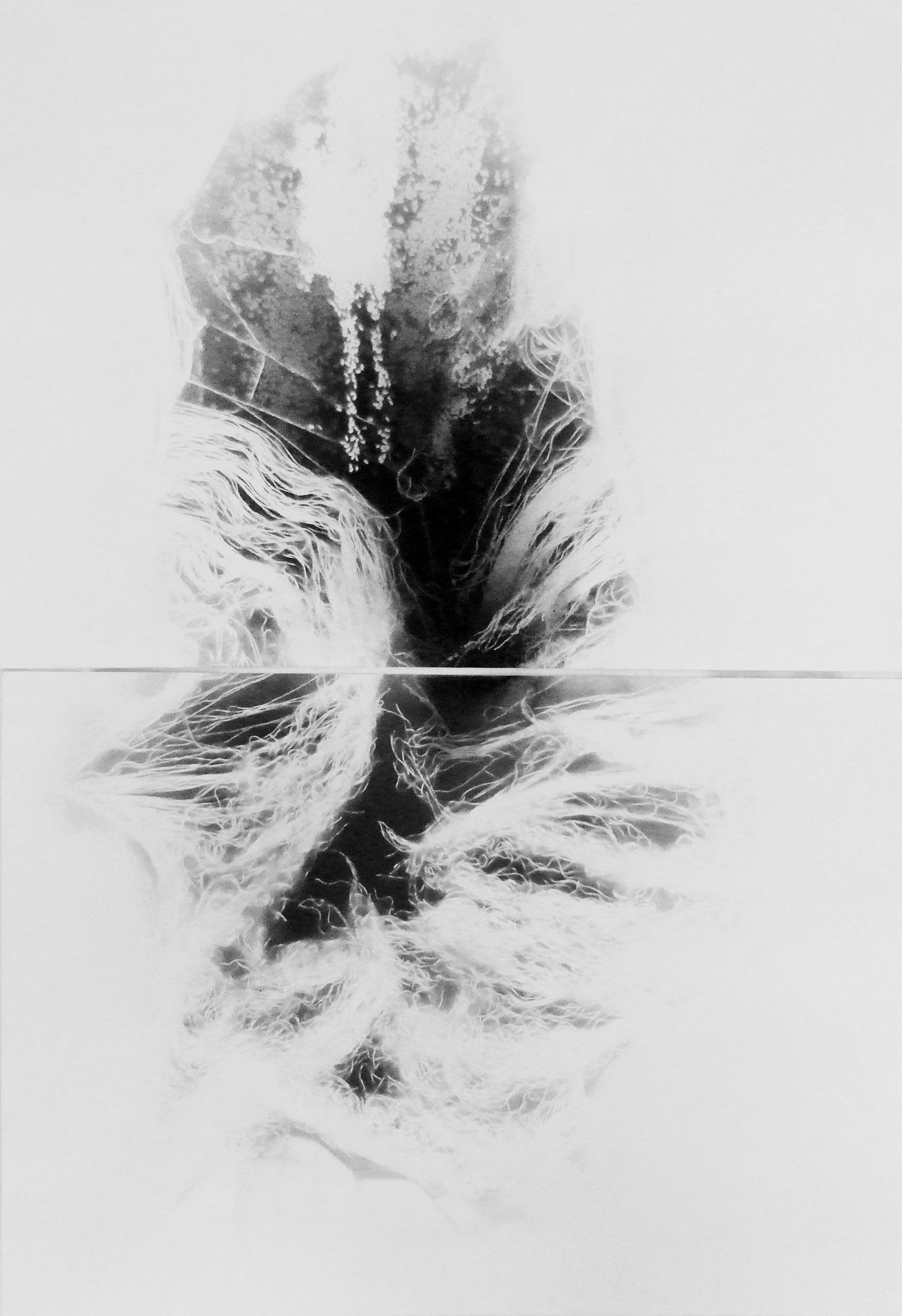 solaris, disegno con polvere di grafite su carta,100x70 2010